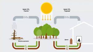 Преимущества отопления древесиной